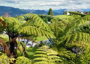 Ferns beside the house. Designer home in New Zealand to sell. Photo: Dietmar Gerster