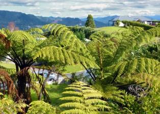 Farne neben dem Haus. Designerhaus in Neuseeland zu verkaufen. Foto: Dietmar Gerster